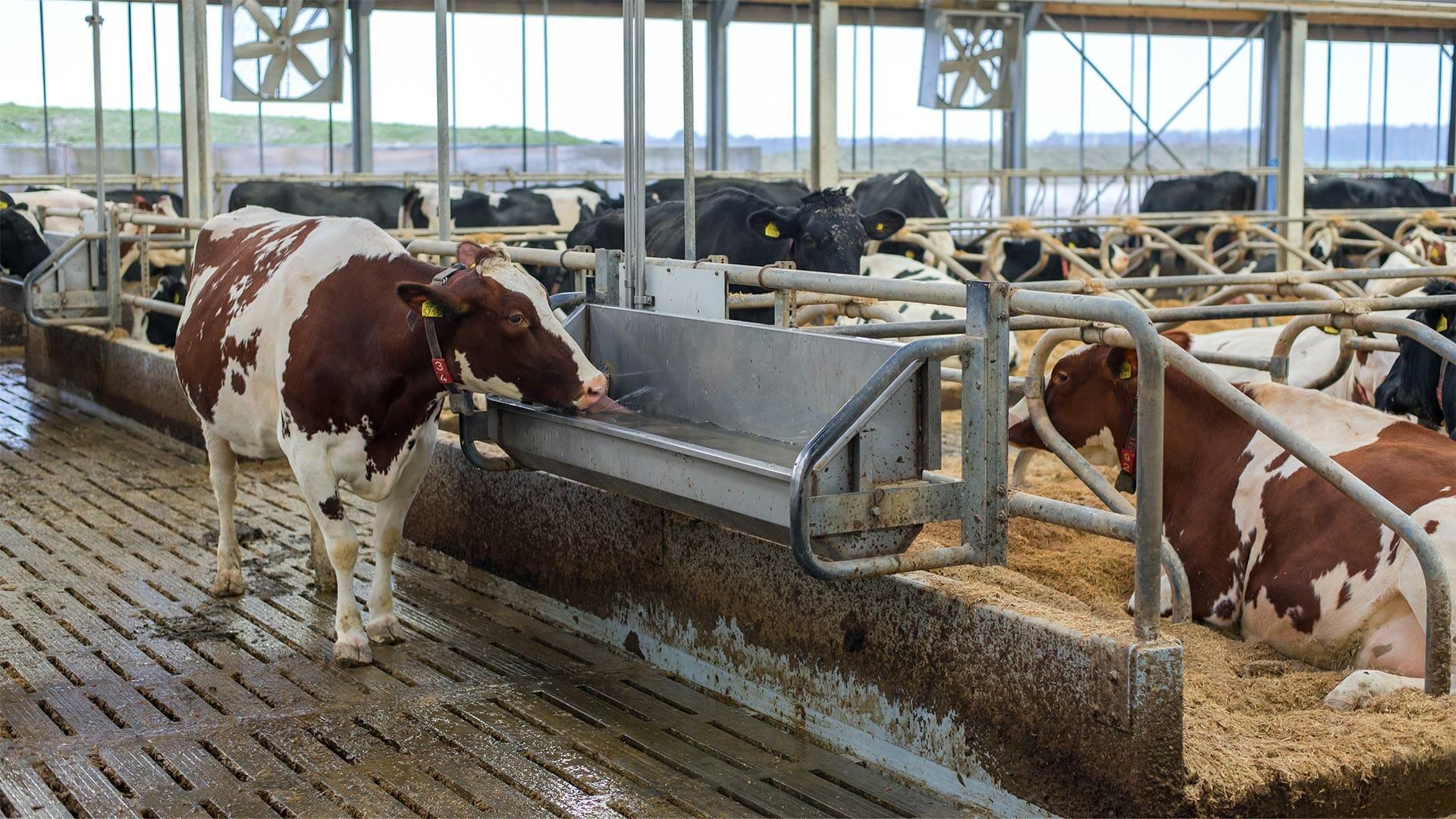 Potabilisation de l'eau en élevage laitier