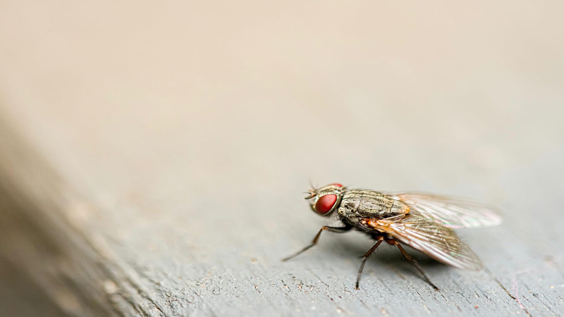 Lutte efficace contre les mouches