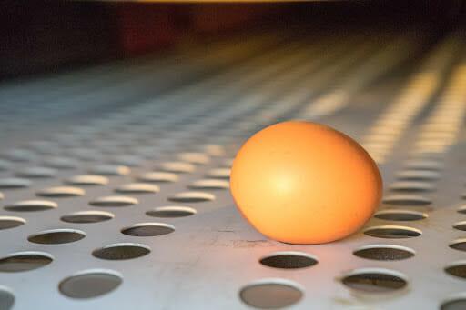 Sterke eieren voor gouden rendement