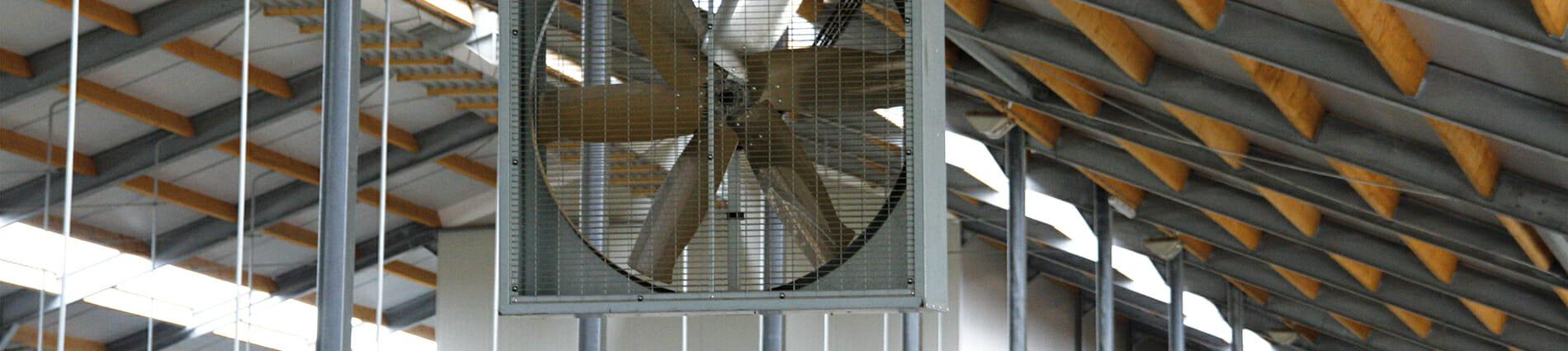 L'importance de la ventilation en élevage